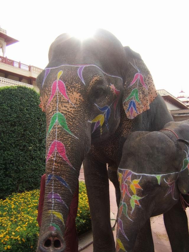 インド象さん