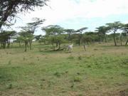 沈まぬ太陽 ケニア 29