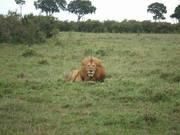 沈まぬ太陽 ケニア 40